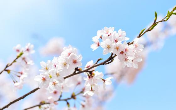 wiosenne_porządki_na_skórze